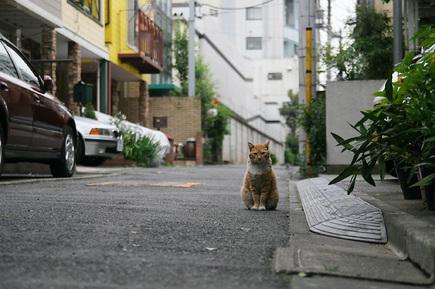 ゑいじう前にて、猫の門番