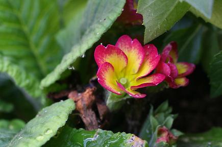 花につく白い変な虫